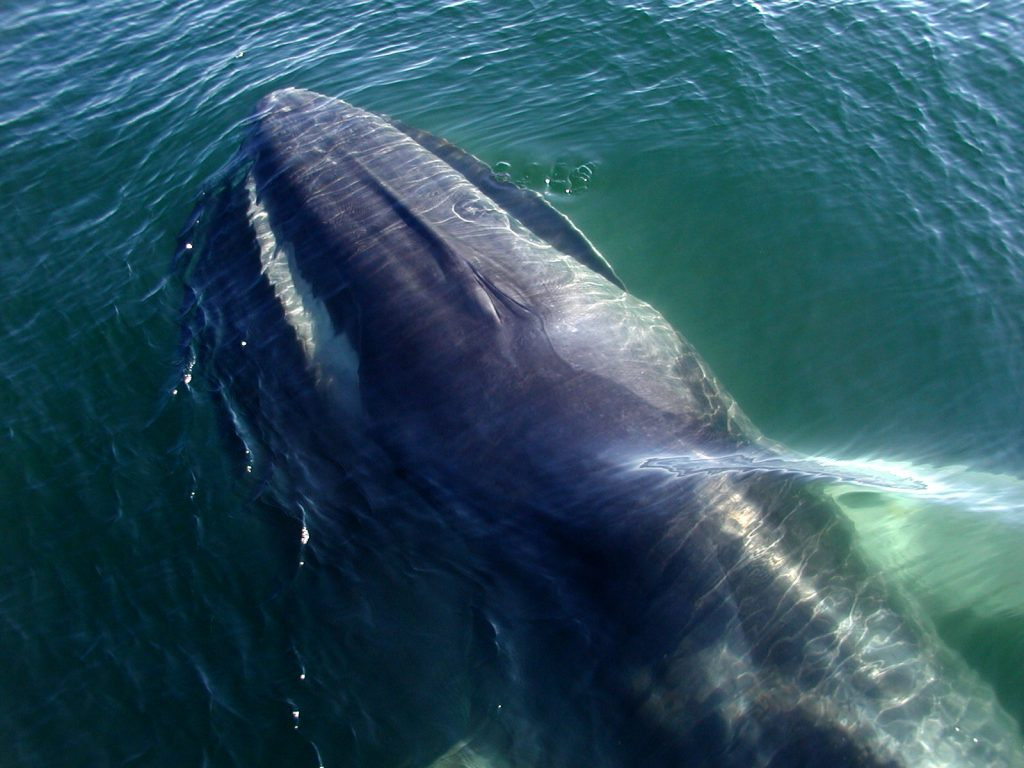 Watching Fin Whale